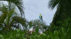 Bahamian Flag with Palm Trees Stock Footage