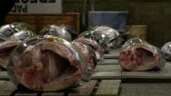TsukijiFishMarket-PreAuctionCloseup.MTS Stock Footage