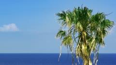 Palmtree and sea. HD 1080. Stock Footage