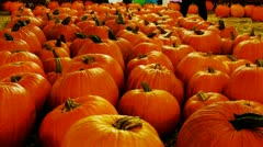 Rows Of Pumpkins At Autumn Carnival Night 2 - stock footage