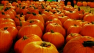 Stock Video Footage of Rows Of Pumpkins At Autumn Carnival Night Zoom 2
