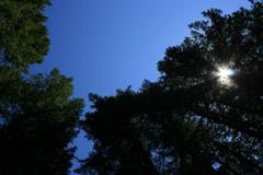 Pic - Sunlight In Pines.jpg Stock Photos