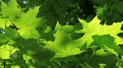 Beautiful green leaves Stock Footage