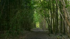Sunlight hits woodland path Time Lapse Stock Footage