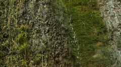 Dripping mossy cliff. Three shots. Stock Footage
