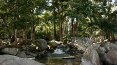 Stream and Trees - stock footage