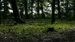 English Woodland - Sunlight emerging. Stock Footage