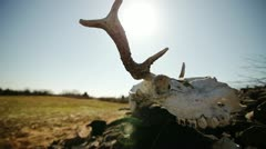 Dead animal and Sun Stock Footage