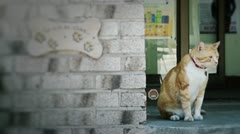 Cat outside Stock Footage