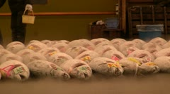 Frozen tuna lined up pre-auction Stock Footage