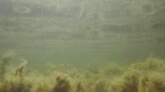 Underwater view seaweeds Stock Footage