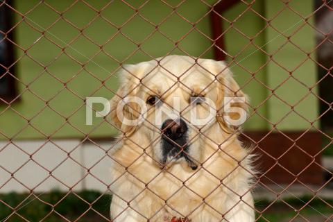 Stock photo of sad dog