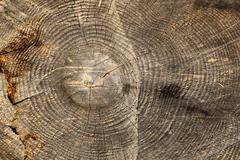 dead wood texture - stock photo
