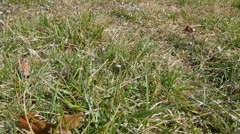 Ungroomed Grass Dolly Stock Footage