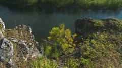Small pine tree on a cliff on the background of the river Stock Footage
