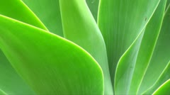 Eco friendly plant background Stock Footage