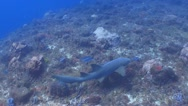 Nurse shark, coral reef Stock Footage