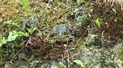 Frog opening mouth Stock Footage