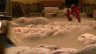 Preparation of frozen tuna for auction Stock Footage