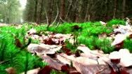Stock Video Footage of Forest People 01