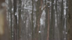 Falling snow in park. Slow motion Stock Footage