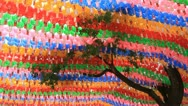 Tree with paper lotus lantern swaying in wind Stock Footage