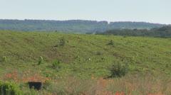 Wild rabbit runs on field Stock Footage