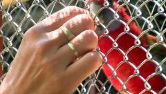 Rosella Parrot Stock Footage