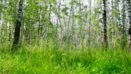 Summer day in the wood Stock Footage