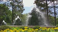 Stock Video Footage of Wood Fountains with Yellow Flowers