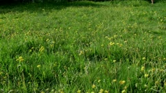 mow the lawn. time lapse - stock footage