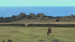 Easter Island horse grazes in front of rock wall 2 Stock Footage