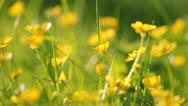 Flowers Stock Footage
