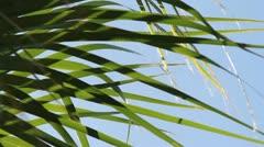 Serene Grass Blades Close-up Stock Footage