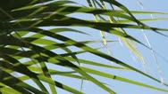Stock Video Footage of Serene Grass Blades Close-up