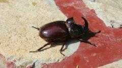 Rhino beetle Stock Footage