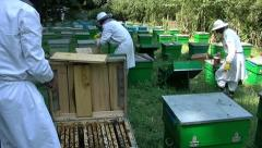 Beekeepers at work - stock footage