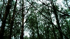 Forest People 10 Stock Footage