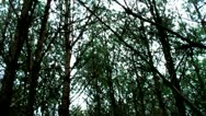Stock Video Footage of Forest People 10