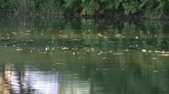 Leaves in a river Stock Footage