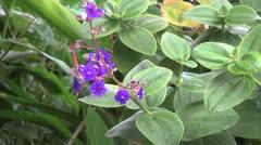 Easter Island rain on stalk and purple flowers 1a Stock Footage
