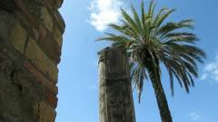 Greek Column with Palm Tree Stock Footage