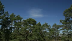 Blue sky above treeline and single wispy cloud in Stockholm archipelago Stock Footage