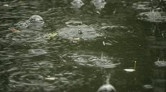 Rain Drops in puddle Stock Footage