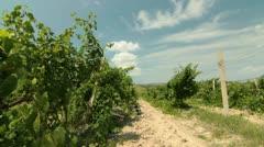 DOLLY: Vineyard Stock Footage