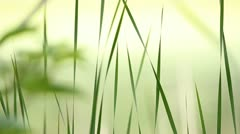Serene Grass. - stock footage