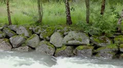 River stream below stones on shore under birches at summer day Stock Footage