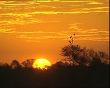 Sunrise at Bharatpur Bird Sanctuary Stock Footage