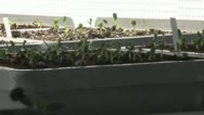 Stock Video Footage of horticulture