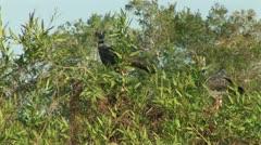 Brazil: Amazon river region birds 7 Stock Footage